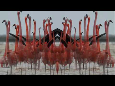 Birds Do It (Official Lyric Video)