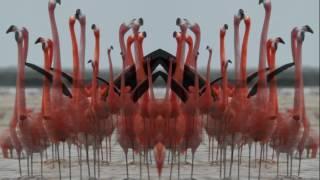 Birds Do It (Official Lyric Video)