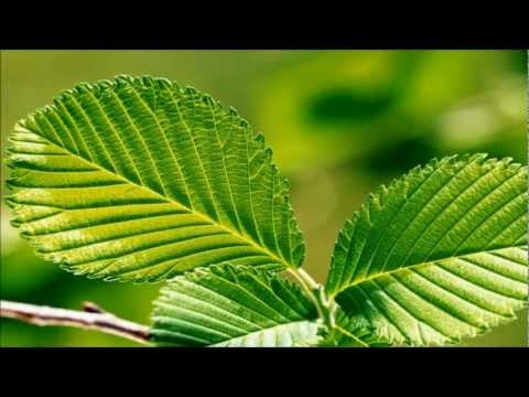 Green Relaxation ~ Meditation Music with Nature Sounds