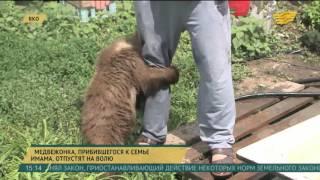 В ВКО медвежонка, прибившегося к семье имама, отпустят на волю