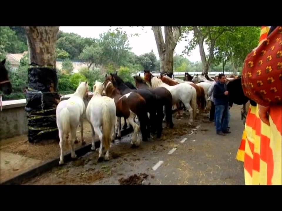 Foire Aux Chevaux 2011 YouTube
