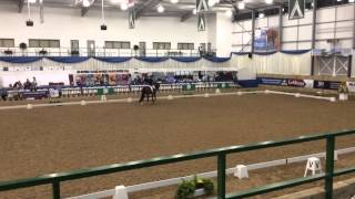 Sadie Smith and River Rise Escarla Novice open freestyle ch
