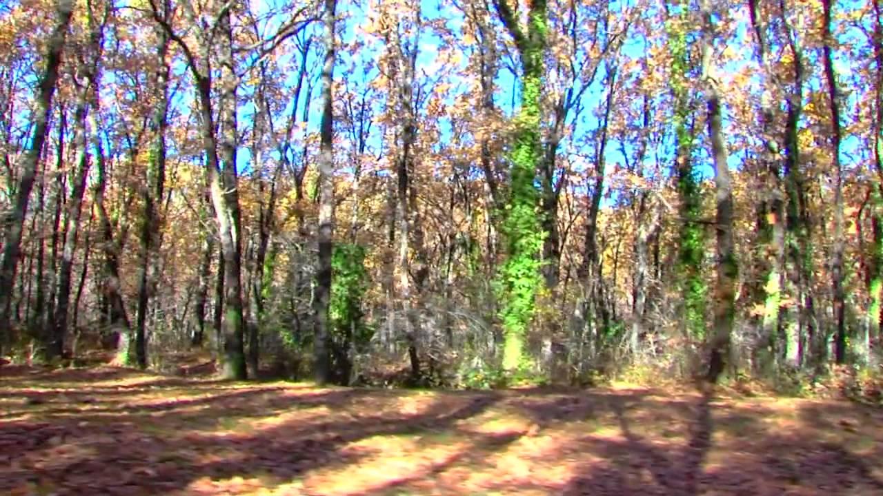 el bosque de la herreria