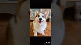 Самые смешные животные Лучшее из смешных видео о животных 2021 года