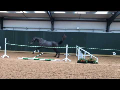Lot 50 Belinsky ZR - Addington Elite Sale Saturday 19th August 2017