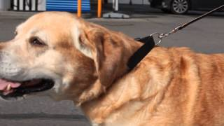 Pimeda mehe ja tema koera kodutee 1