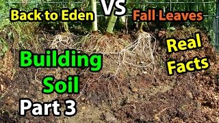 Back to Eden Organic Gardening 101 Method with Wood Chips VS Leaves Composting Garden Series  Part 3
