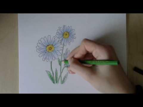 Как нарисовать цветок карандашом поэтапно для начинающих ромашки