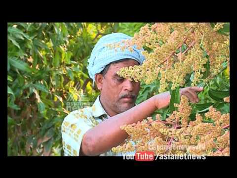 Orange Farms in UAE |Gulf Roundup 26 March 2016