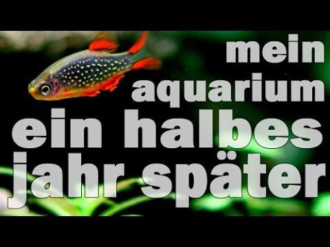 Mein Aquarium - Ein halbes Jahr später (UPDATE) Pisc