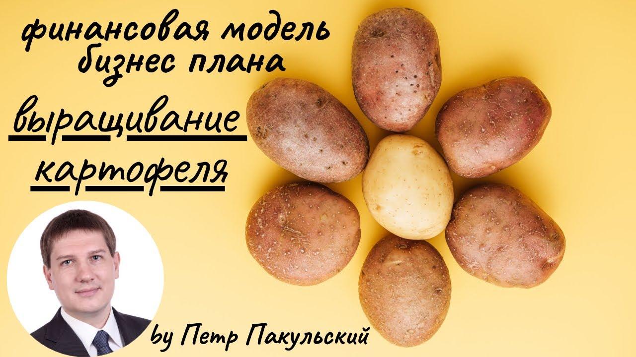 Объявления. Продовольствие овощи картофель, цены, торговля,. Продам картофель оптом от производителя московская обл. Цена 3, 5 руб.