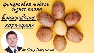 Бизнес план фермы по выращиванию и оптовой продаже картофеля.