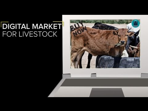 Digital haat to allow a market for livestock