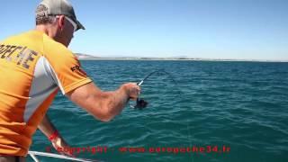 Pêche à la traine avec les leurres USAMI. Pêche au jig en dérive. EUROPECHE34