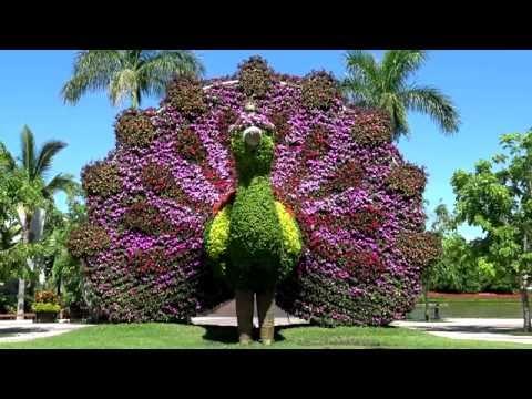 Jardines de Mexico 4K