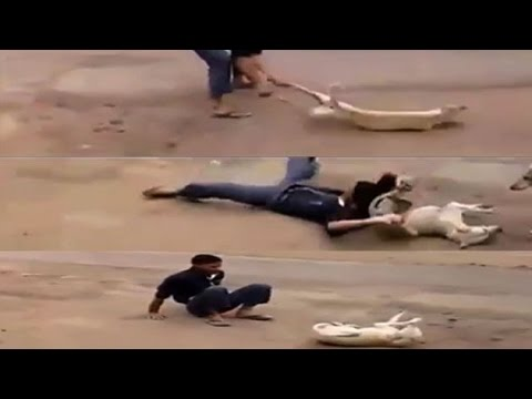 Video showing sadist boy  whirling a dog, ramming on road