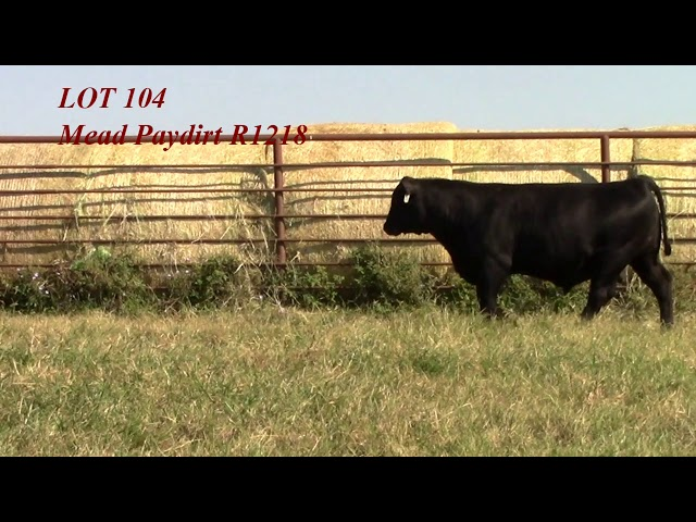 Mead Angus Lot 104