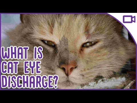 Cat Eye Discharge - What is it and when should you see a vet!
