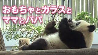 2018/9/13 午前のお外シャンシャン!ママにくっついてゴロゴロ♡ thumbnail