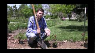 How To Plant A Hedge Video