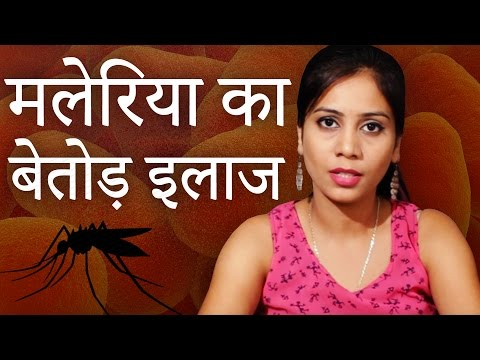 मलेरिया का बेतोड़ इलाज │ Malaria Ka Gharelu Ilaj │ Imam Dasta │ Malaria Cure With Home Remedies