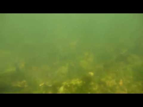Otter Tail River Snorkeling