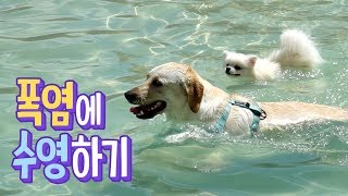 ENG SUB _ Swimming on a hot summer day