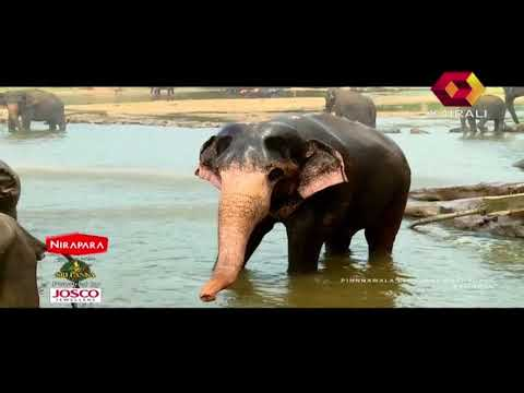 Flavours Of Srilanka | 18th February 2018