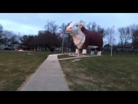 Albert the Bull!