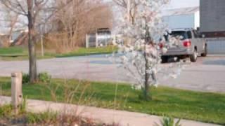 Spring Flick at Crown Point, Cedar Lake, Indiana USA
