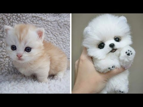 Cute baby animals - The cutest animals can only be puppies and kittens