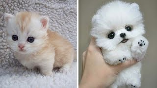 Cute baby animals  The cutest animals can only be puppies and kittens