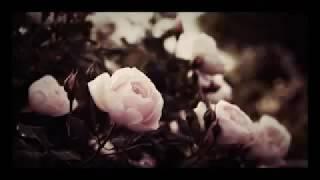 اجمل اغنية تركية (ارجوك اتصل -توفانا توركاي ) 🎶💕💕