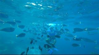 видео Развлечения на Мальдивах