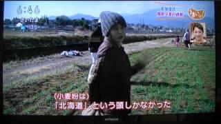 神奈川県の 「 湘南小麦 」 が、NHK 「 うまいッ!」 で食育イベント 「...