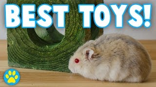 3 Toys Every Hamster NEEDS!