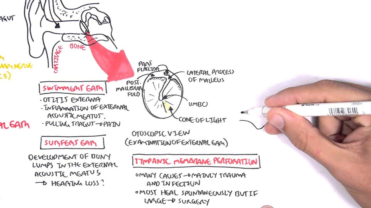 anatomy middle ear [ 1280 x 720 Pixel ]