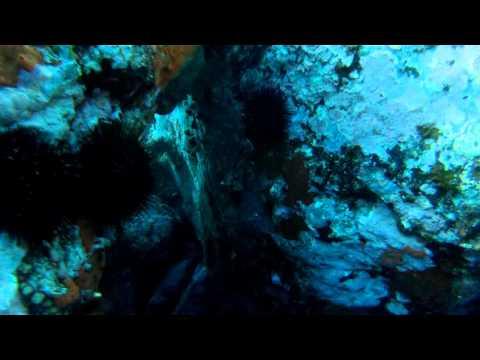 Réserve Marine Naturelle Cerbère Banyuls Comptage 2014 DiviX HR