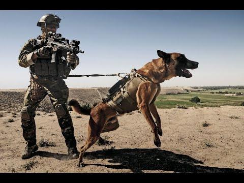 German Shepherd Military Soldier