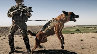 German Shepherd Military Soldier