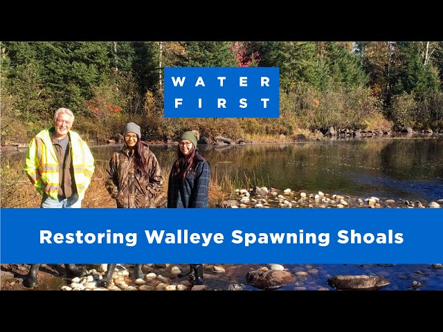 Restoring walleye spawning shoals in Kebaowek First Nation