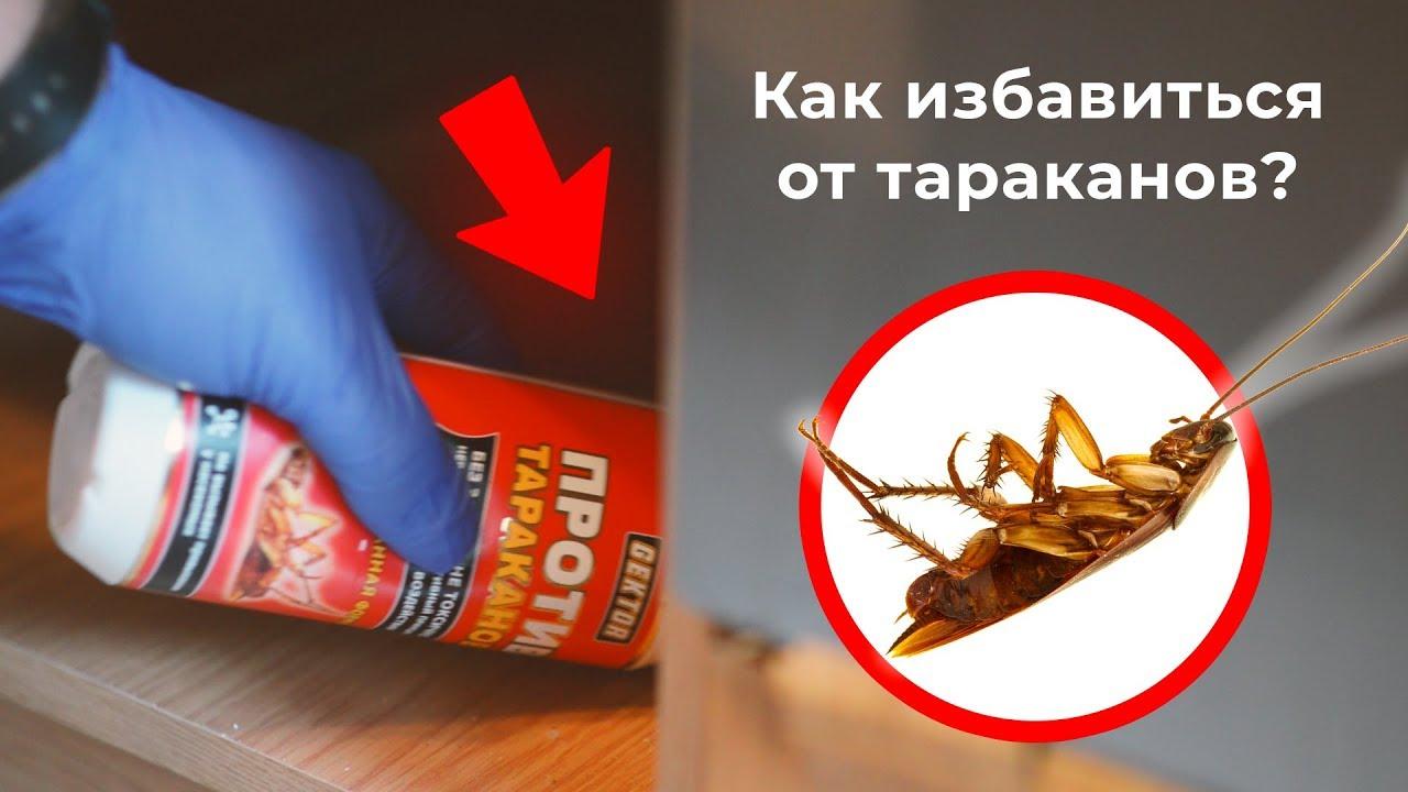 Как избавиться от тараканов в квартире средством GEKTOR