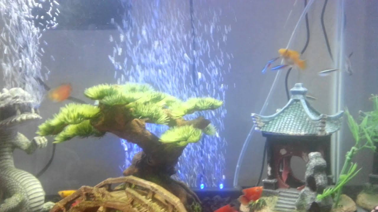 My 20 gallon asian theme tank youtube for 20 gallon fish tank decoration ideas