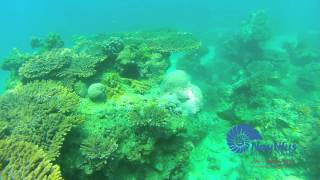 THE movie ( Diving In Kuwait with Nautilus Diving Kuwait)