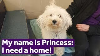 Adopt Princess | Dogs | Mayhew