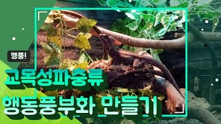 교목성 파충류 행동풍부화 용품 만들기 !! 인지 감각 …