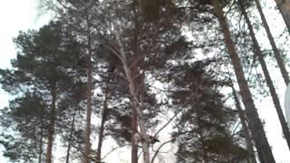 Кошка и вороны Славутича