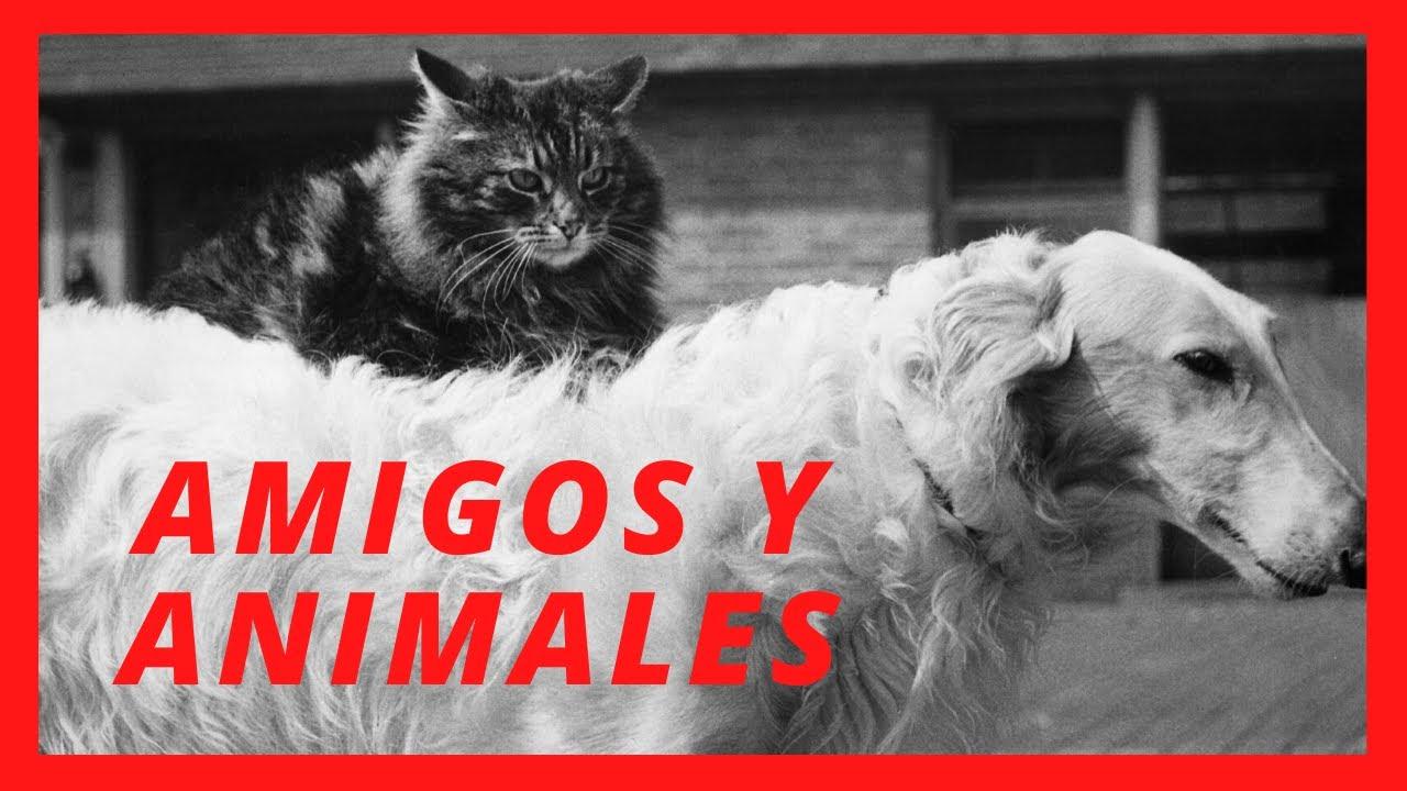 Amistades animales. Extraños compañeros - YouTube