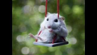 10 Best Photo Hamster in Nature - Cute Moments