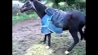 Девка чешит коню яйца!!!Жесть1!!!